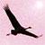 silhouette kraanvogel